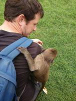 NFJ-Thai Monkey